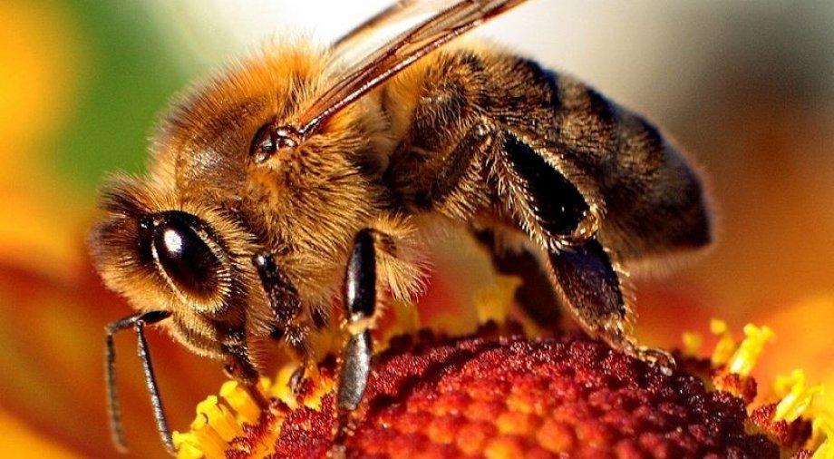 Baranya Megyei Önkormányzat részt vesz a Bee2Bee projektben